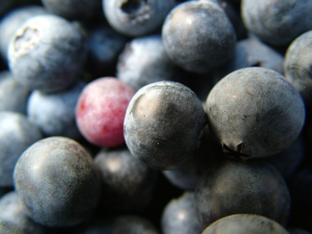 Close up picture of berries